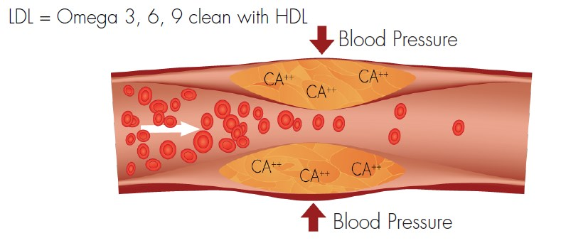 LDL = Omega 3,6,9 clean with HDL
